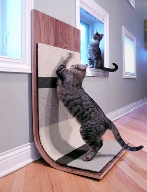 Modern Cat Scratcher By Moderncritter
