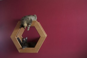 Wall Mounted Cat Shelf HabiCat by Griffith Designs