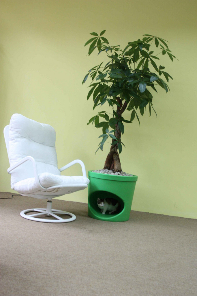Pet Planter 5