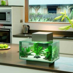 Stylish Fish Tank for Your Home