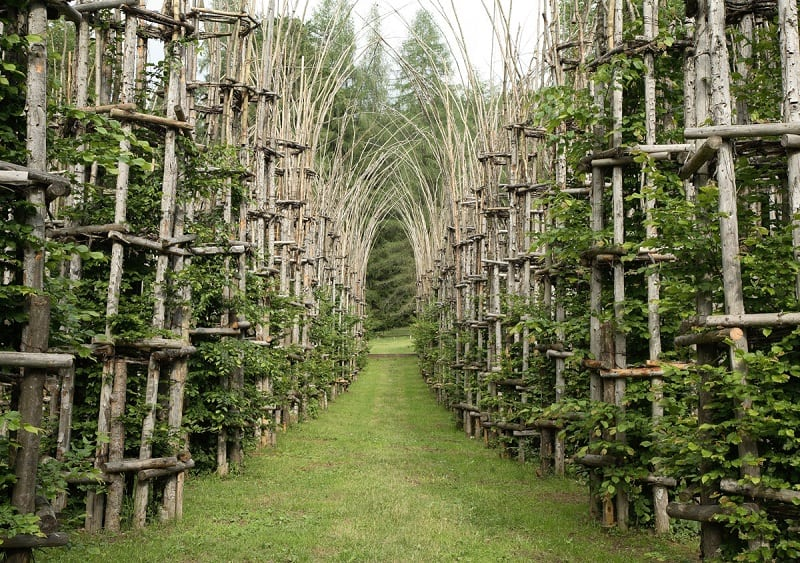 Mesmerizing cathedral made of living trees