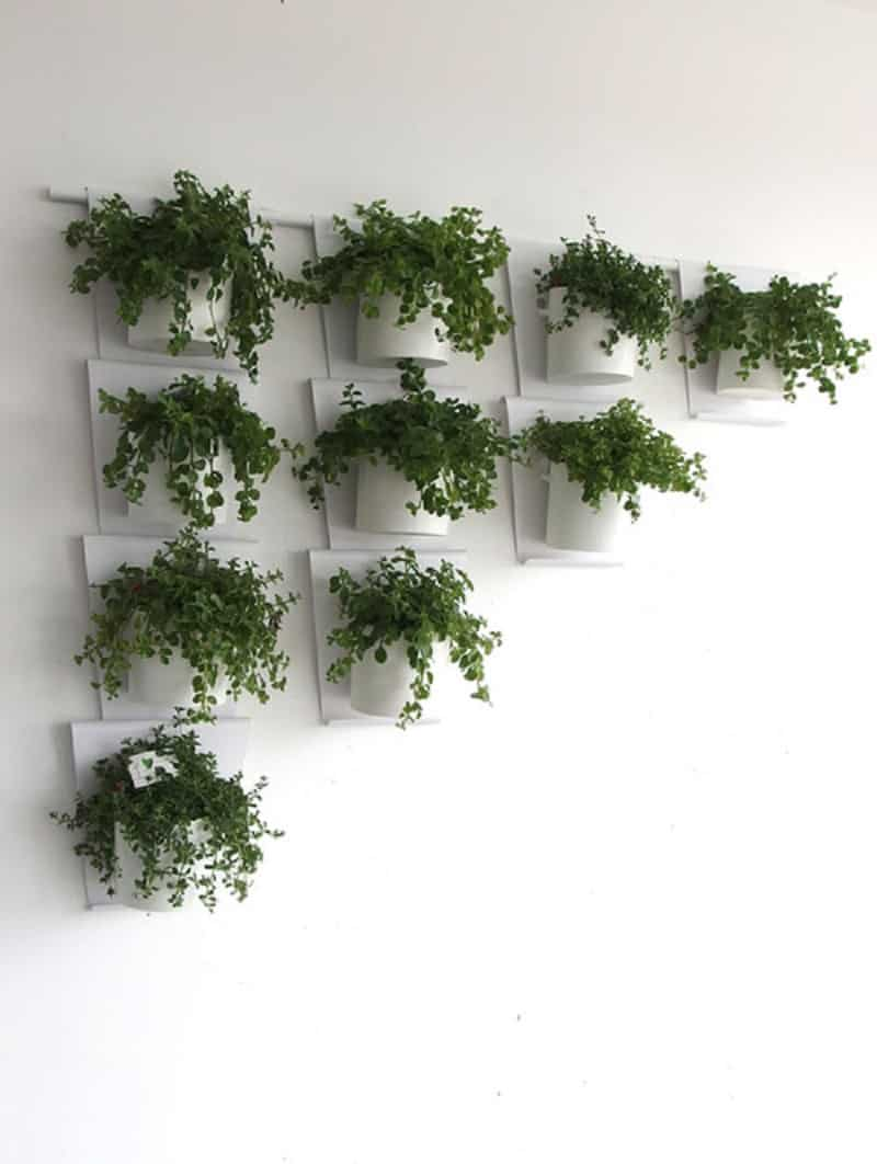 Vanzha-planters-07