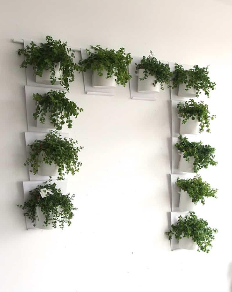 Vanzha-planters-08