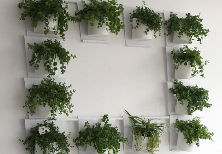 Vanzha-planters-09