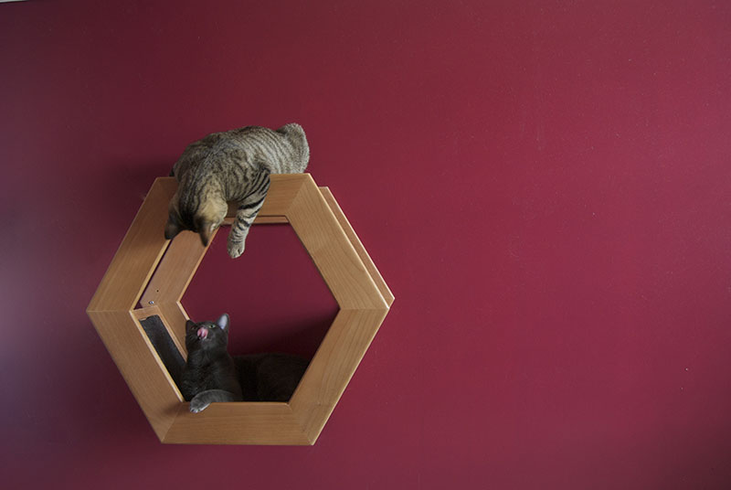 Wall Mounted Cat Shelf HabiCat 1