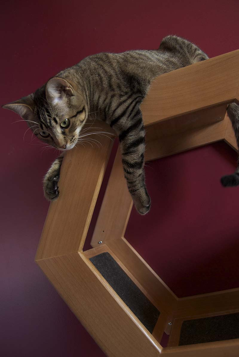 Wall Mounted Cat Shelf HabiCat 4