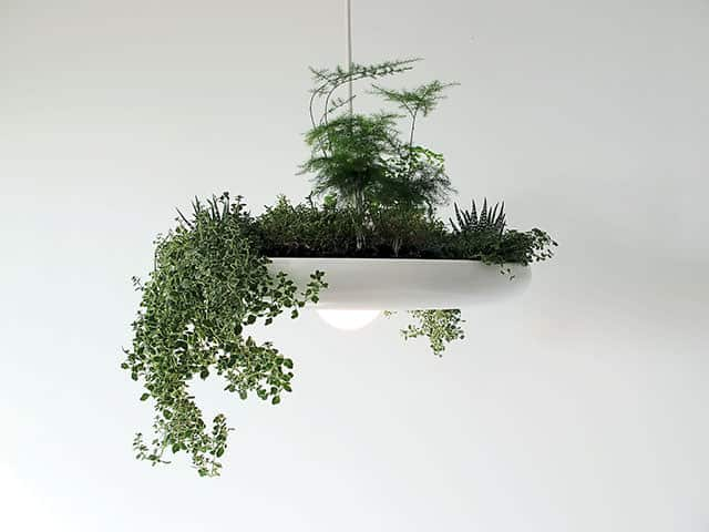 The Babylon Lamp cum Indoor Herb Garden