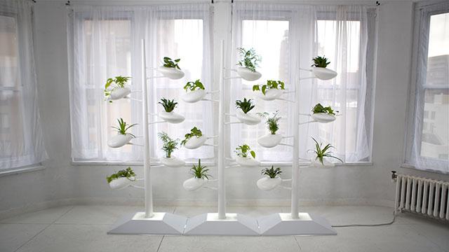Live Screen Indoor Garden by Danielle Trofe