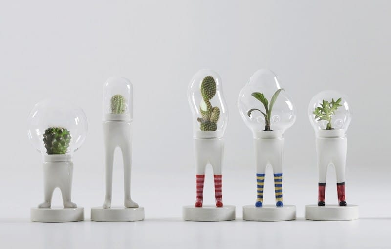 Astronaut suits for cacti and succulents