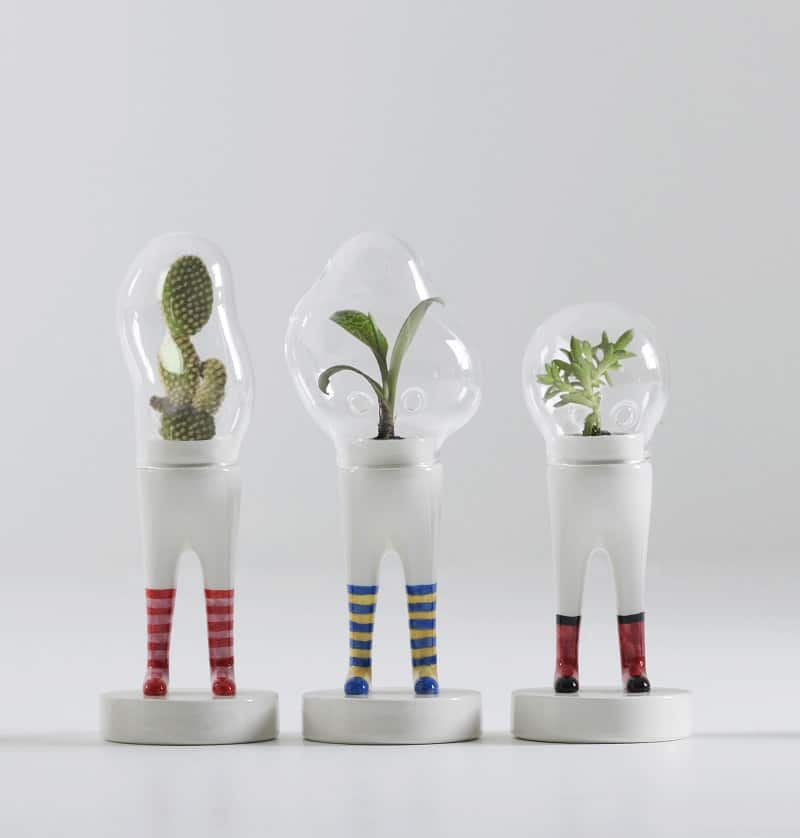 Astronaut suits for cacti and succulents1