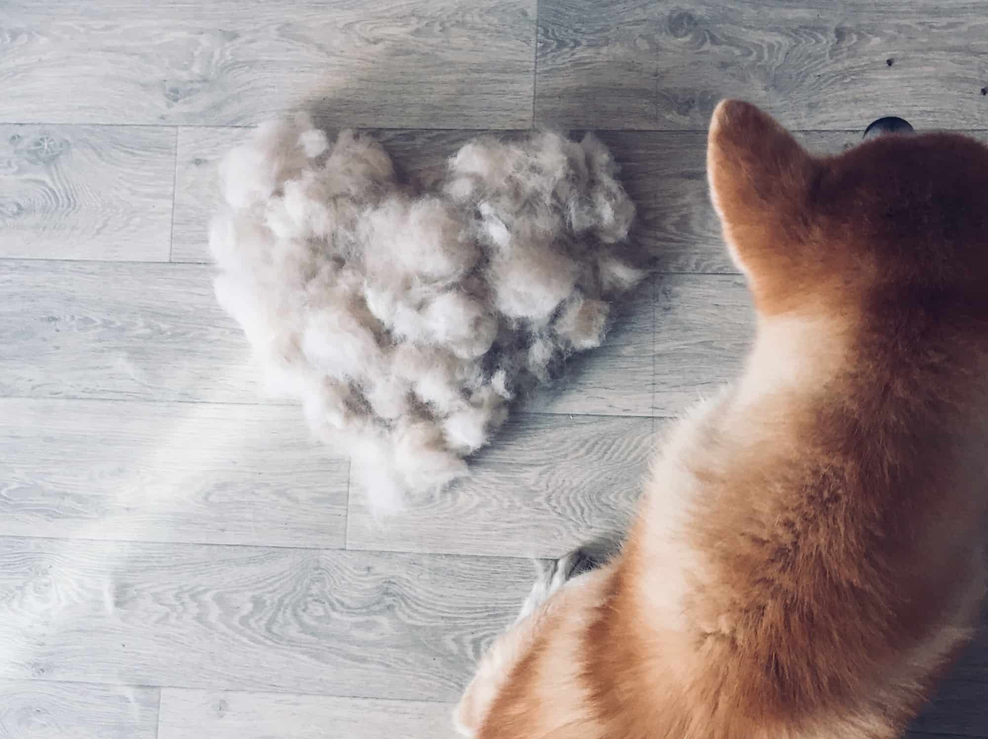 dog shedding, dog hair, heart