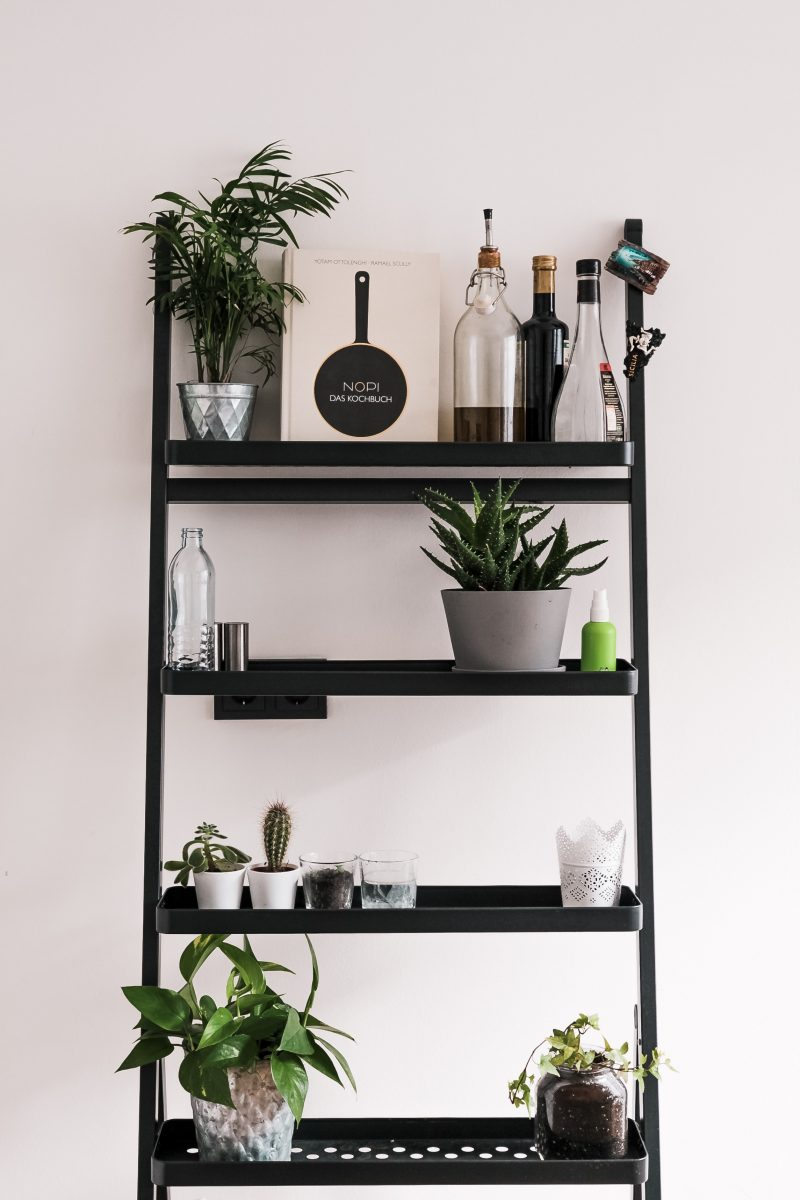 green potted plant on black wooden shelf