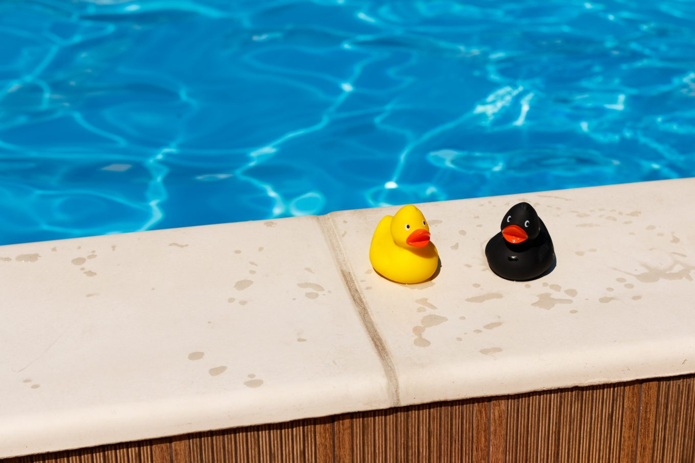 yellow and black duck on white concrete surface