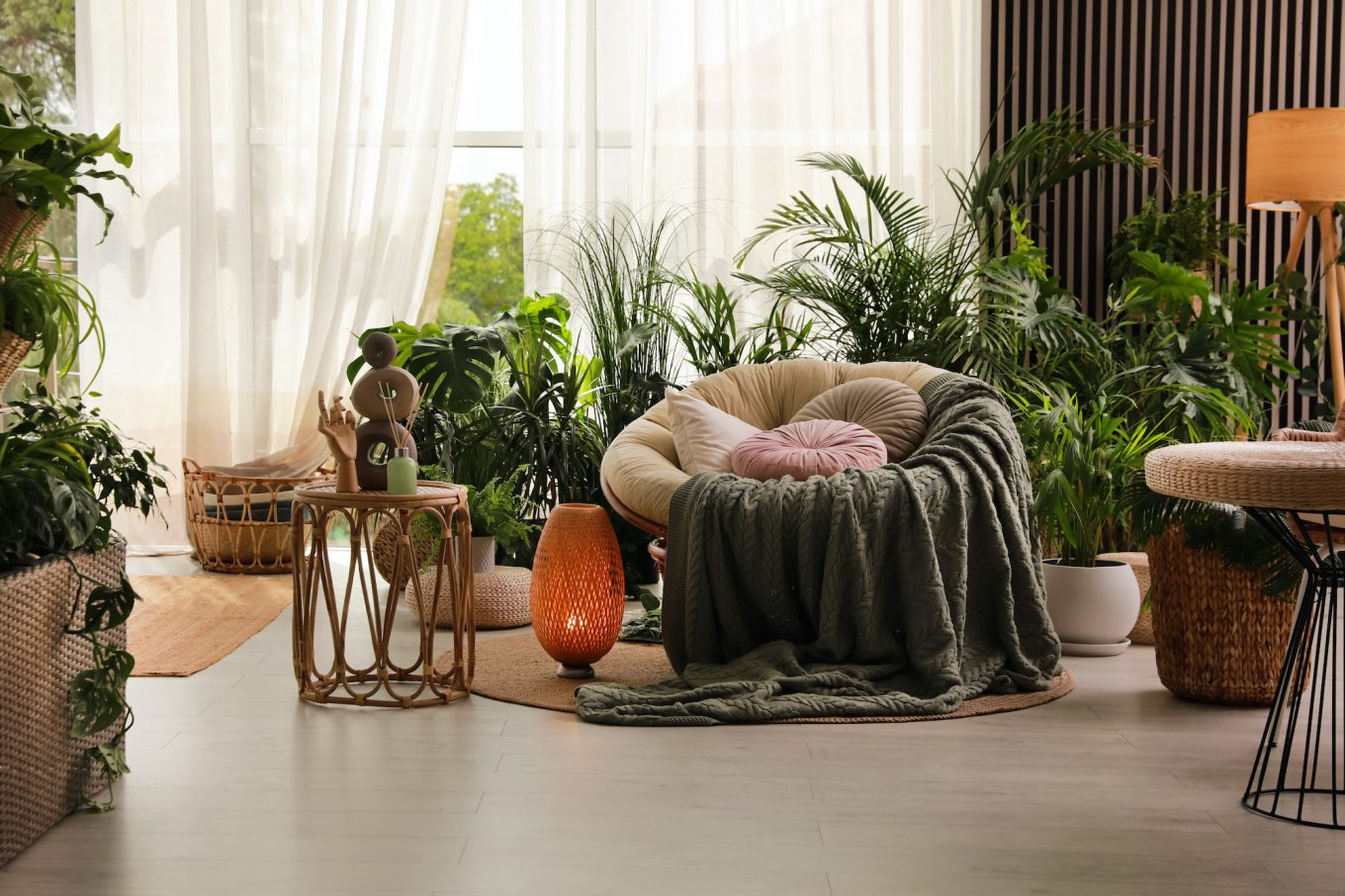 papasan chair with a blanket draped over it in a room with house plants
