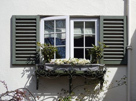 white-flowering plant near glass window